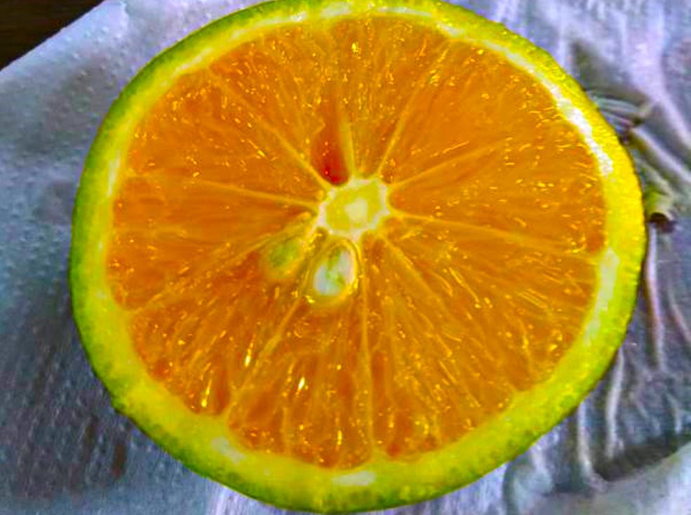 Aula de Ciências Aplicadas do 2º ano - Descobrindo se a laranja é um sólido, que se come, ou um líquido, que se bebe?